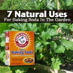 7 Natural Uses For Baking Soda In The Garden | Pearltrees