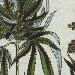 Magickal Herbs | Pearltrees